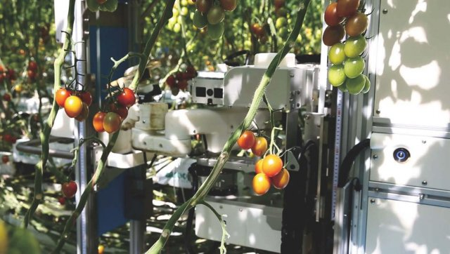 Introducing AI-equipped Tomato Harvesting Robots to Farms May Help to Create Jobs