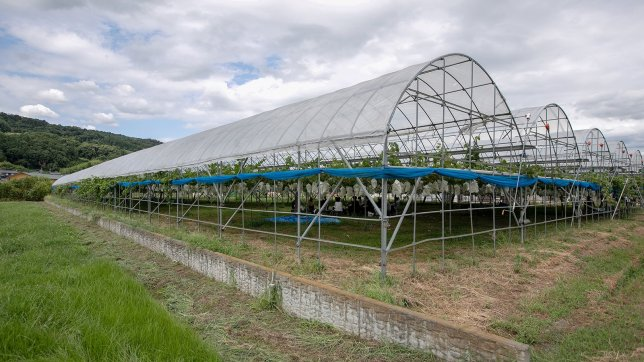 Panasonic Is Transforming Agriculture with Its ICT Tools and Soil Analysis Service (Part 2 of 2)
