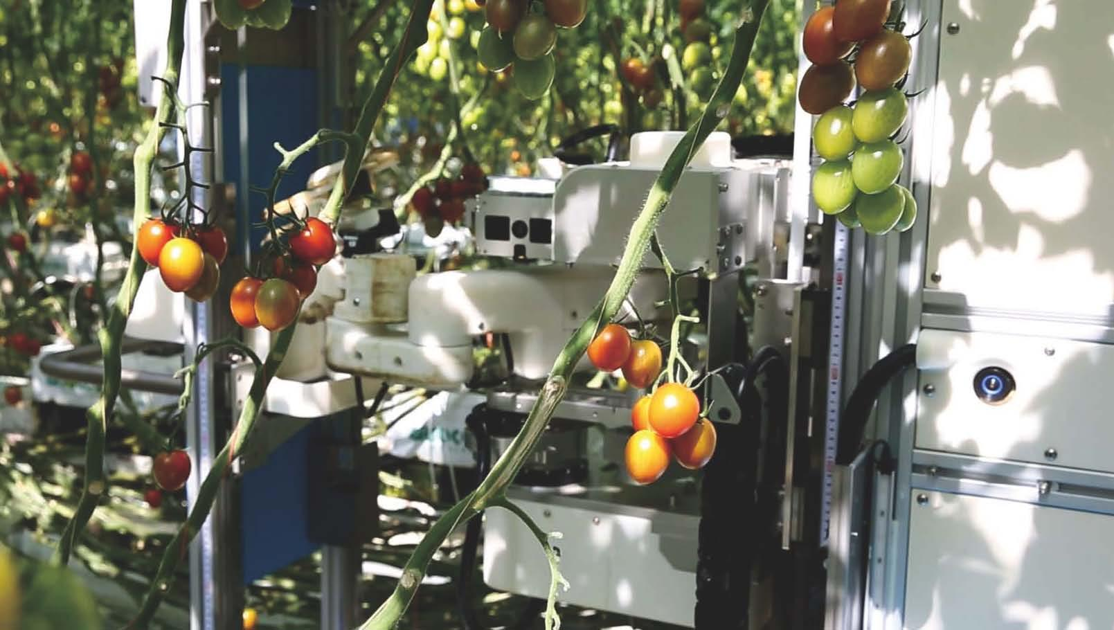 Introducing AI-equipped Tomato Harvesting Robots to Farms
