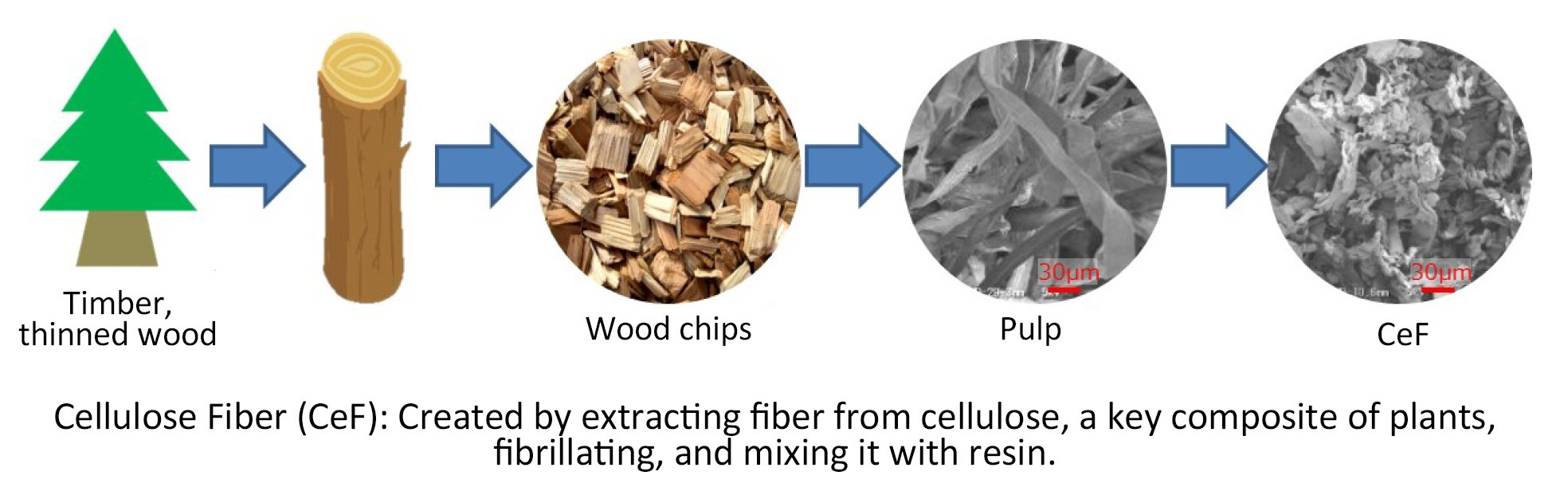 Illustration: Cellulose Fiber (CeF) is created by extracting fiber from cellulose, a key composite of plants, fibrillating, and mixing it with resin.
