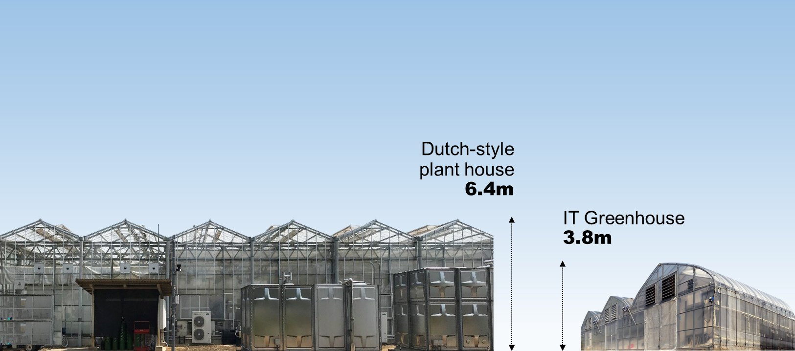 Difference in height: Dutch-style and IT Greenhouse