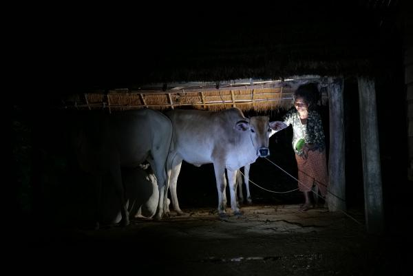 photo: The solar lantern is useful when venturing out at night to check on the cows in their shed.