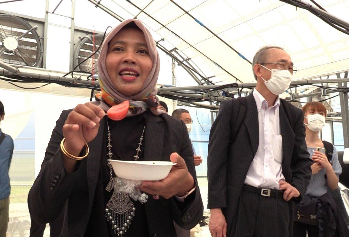 Photo: Dr. Sri Nuryanti tasting the tomatoes grown in the plant factory on Ishigaki Island