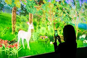 "Forest for the Trees, 59 Panasonic Laser projectors tell ""Story of the Forest"""