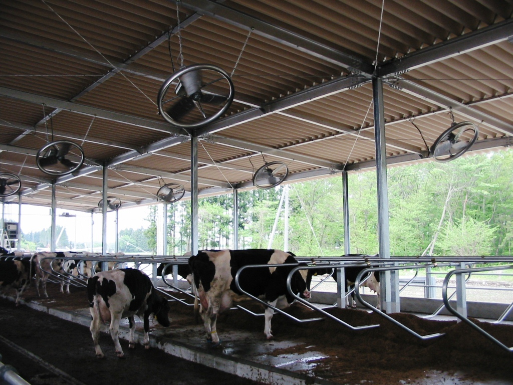 パナソニック「DCスマートファン」牛舎(乳用牛)設置イメージ