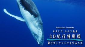 Panasonic Presents 3D番組「タヒチ・ルルツ島 親子ザトウクジラを守る入江」