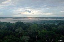 世界遺産スペシャル -9月 ブラジル:アマゾンの熱帯雨林-