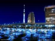 東京ホタル TOKYO HOTARU FESTIVAL 2012