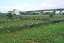 苗木を植林する。場所は台湾新幹線の桃園駅近く