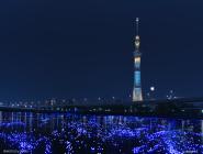 東京ホタル(R) 開催イメージ