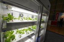 水耕栽培のインキュベーションシステムとマイクロミスト発生器
