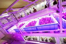 植物工場向けの農業アシストシステムを世界で初めて参考出展
