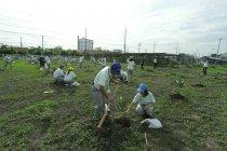 タイ:在タイのパナソニックグループ各社共同での植樹の様子
