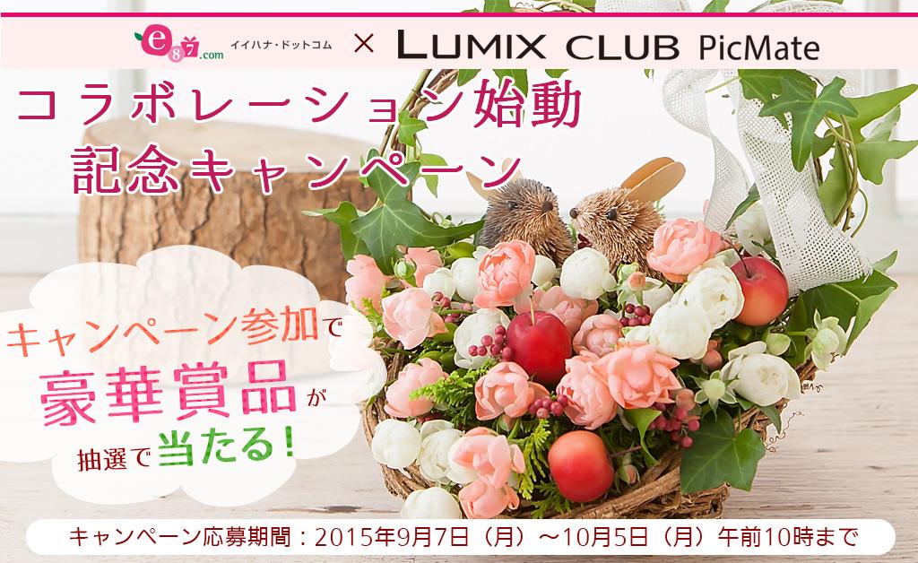 大切なあの人にお花を贈ろう!イイハナ・ドットコム×LUMIX CLUB PicMateコラボ始動!