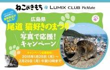 猫好き集まれ!『尾道 猫好きのまつり』で盛り上がろう!