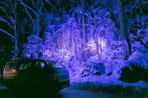 LEDカラー投光器「ダイナペインター」による青森県十和田市「奥入瀬渓流」ライトアップの様子(2)