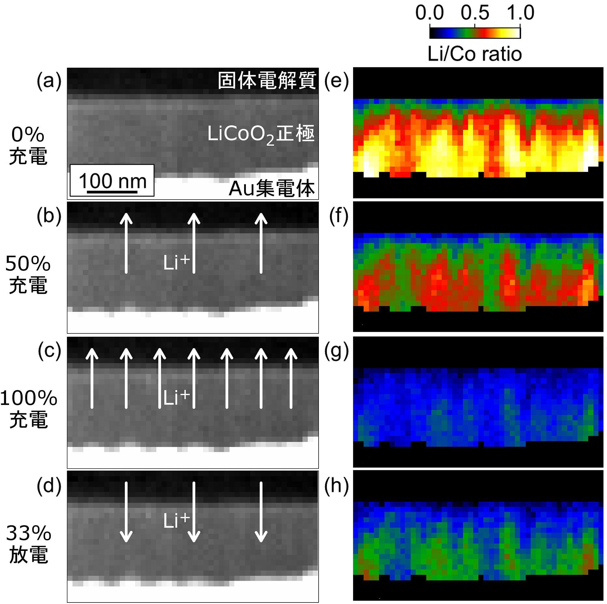 【図1】充放電中におけるLiCoO2正極内部のLiイオン濃度分布の変化