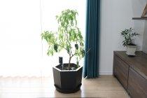 「Smart Planter(TM)」