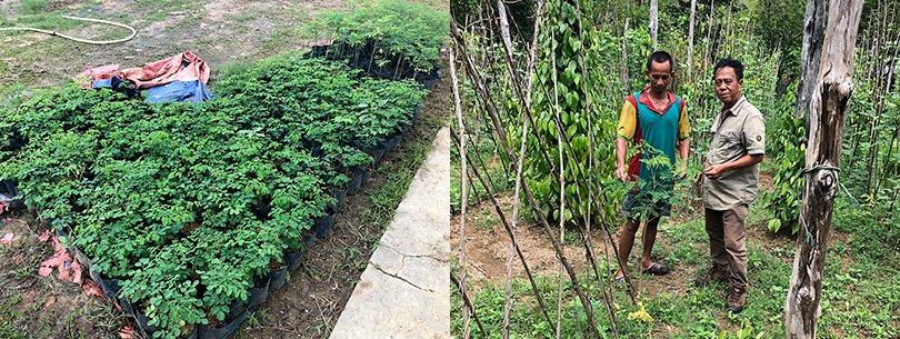 写真:現地NGOが栽培したスーパーフード、モリンガの苗(写真左)と、それを畑で育てる農民(写真右)。