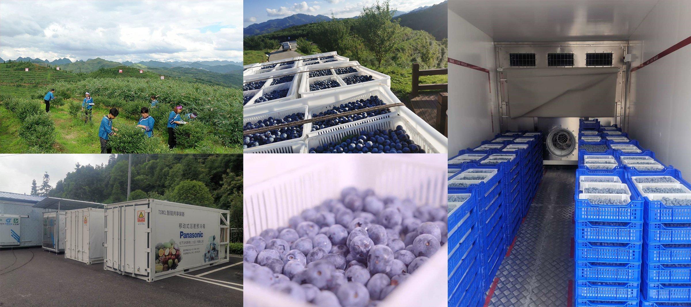 写真:収穫したブルーベリーを「産地予冷移動式コンテナ」で予冷し、鮮度を保ったまま消費地へと輸送。