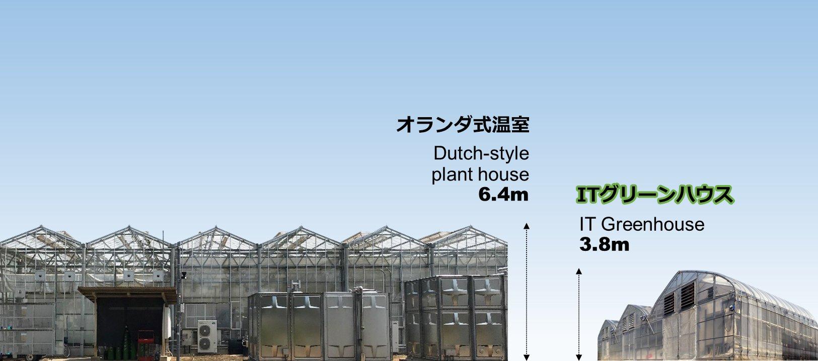 オランダ式温室に比べ天井高を抑えた「ITグリーンハウス」